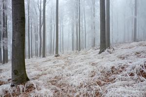 Úskalí statistiky lesnictví