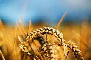 Zemědělství vroce 2013