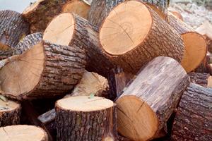 Palivovým dřevem topí téměř čtvrtina domácností