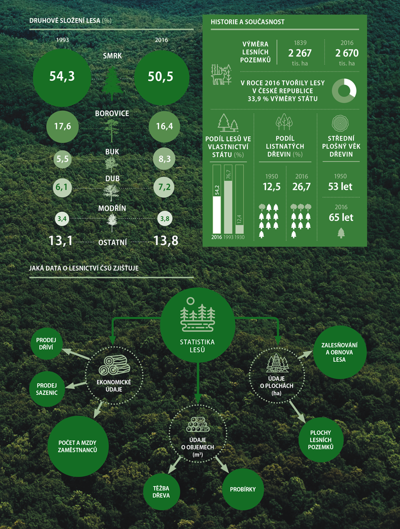 Statistika lesů 3