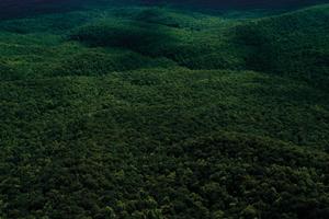 Statistika lesů