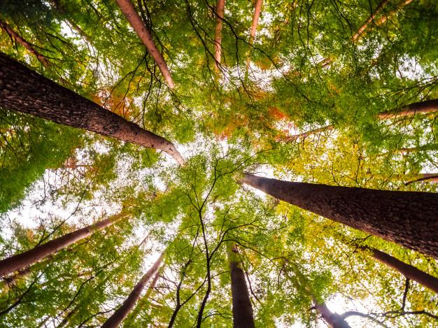 Význam přírody dokáže spočítat ekosystémové účetnictví