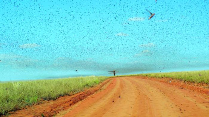 Sarančata zatemňují oblohu nejen nad Afrikou