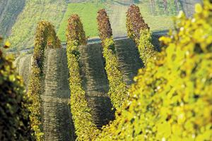 Evropskému vývozu vín vévodí Francie
