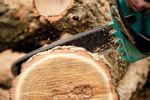 Rekordní těžba dřeva souvisí skůrovcovou kalamitou