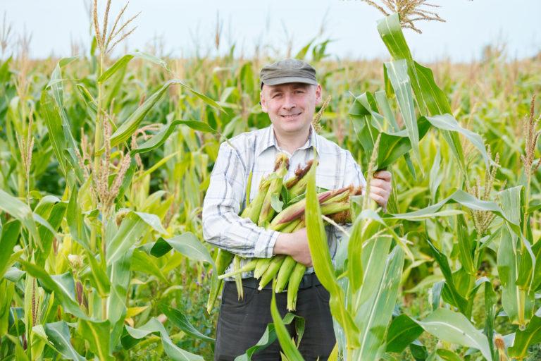 Sčítání zemědělců v plném proudu
