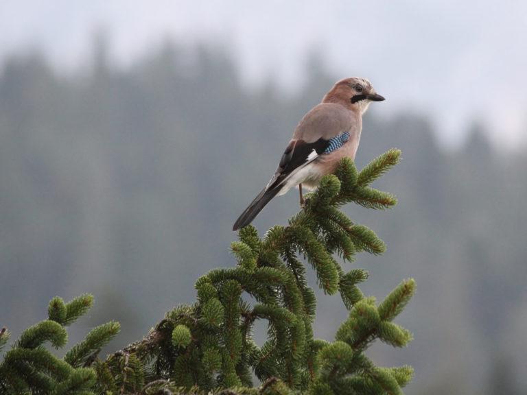 V Evropě od roku 2000 ubyla téměř pětina polních ptáků