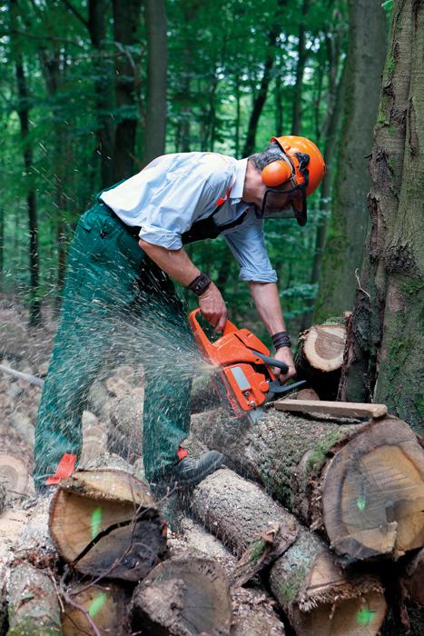 Těžba dřeva i zalesňovaná plocha na vzestupu